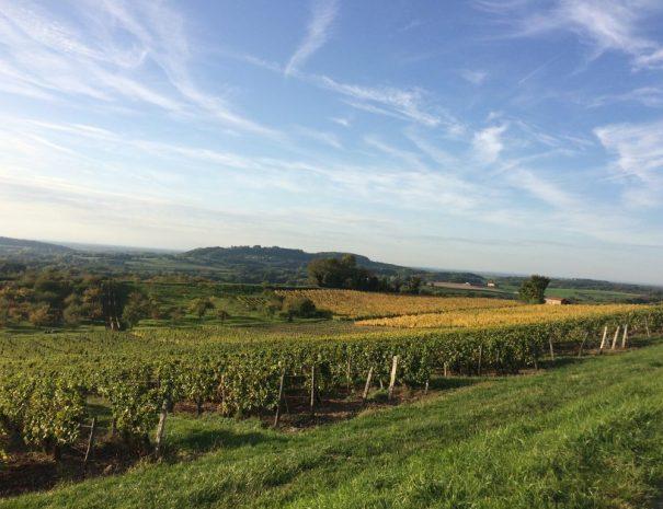 Les Filles Tresy uitzicht over wijgaarden