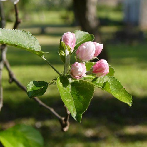 les filles tresy rozen en tuin