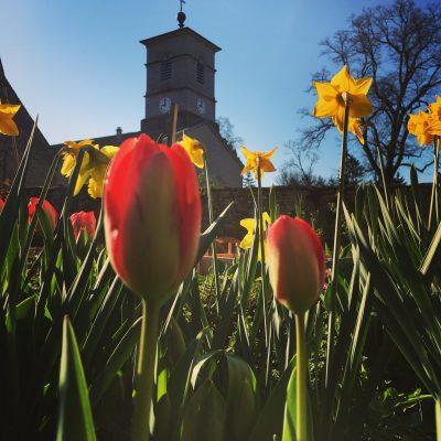 Les filles tresy tulpen